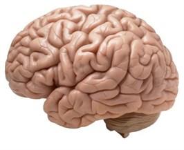 Brein ouderen
